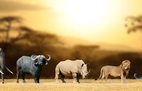Where to find the Big Five in Kenya